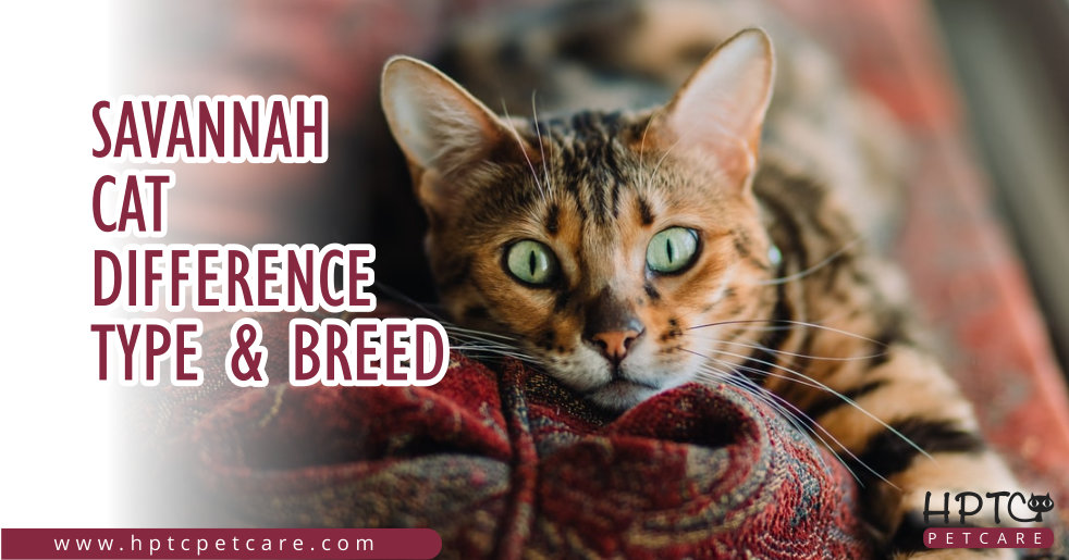 Savannah Cat Difference Type & Breed