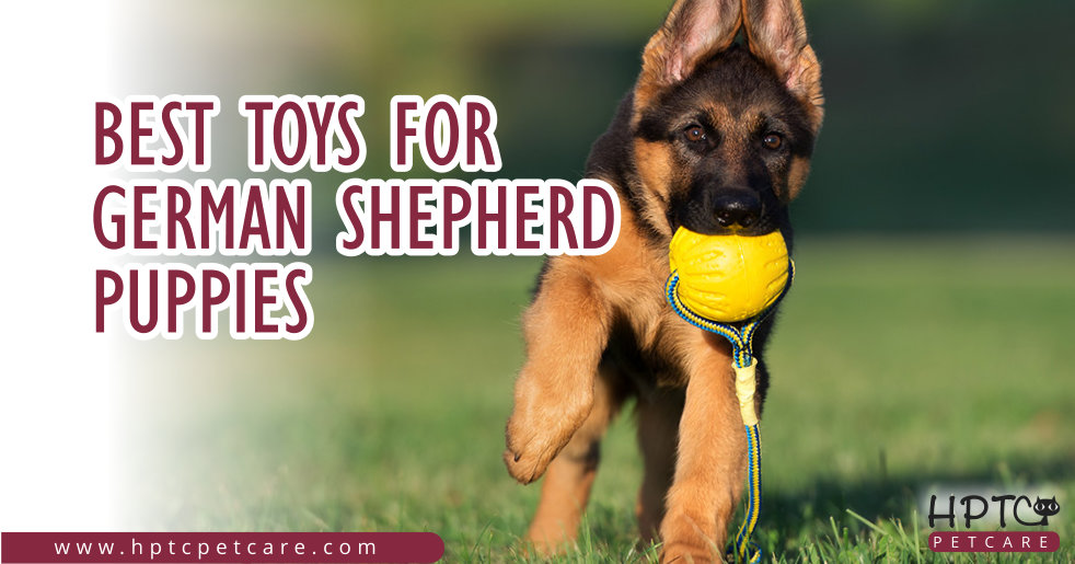 Best Toys For German Shepherd Puppies