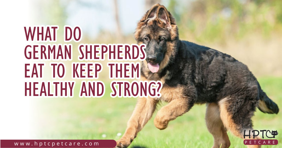 What Do German Shepherds Eat To Keep Them Healthy And Strong